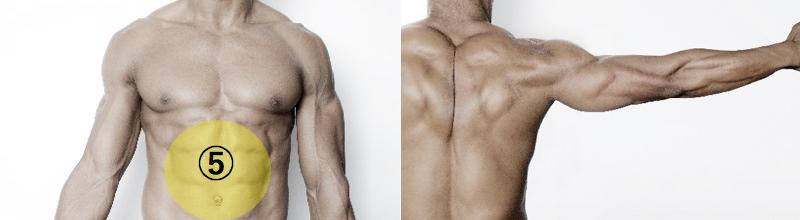 上半身の筋肉3