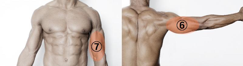 上半身の筋肉4