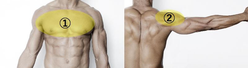 胸と肩の筋肉